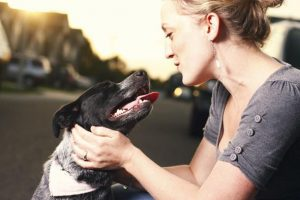 7 Best Dog Training Tips for Successful and Effective Dog Training
