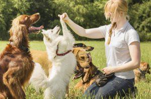 dog training katy tx