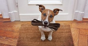 8 Ways Your Dog Helps Reduce Your Stress