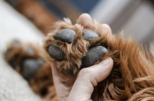 9 tips for taking care of your dog's paws