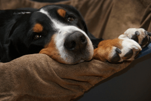 8 Fun Facts About Your Dog's Paws!