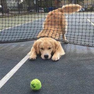 for dog training