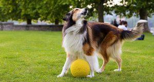 dog obedience school san diego