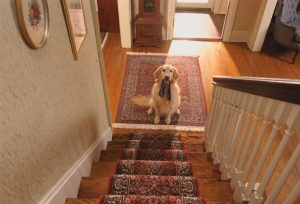 dog training without clicker