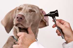 Top 6 Tips to Prevent Health Problems in Dogs