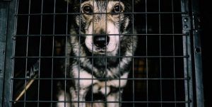dog care insurance