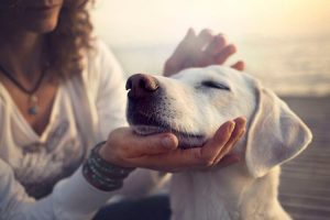 5 Simple Dog Training Tips That Will Change Your Dogs In No Time!