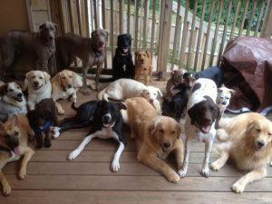pack leader training