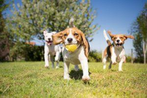 dog home insurance