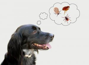Top 5 Most Common Dog Health Problems