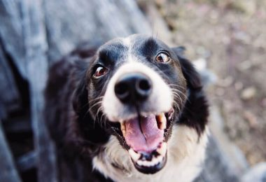 how often dog teeth cleaning