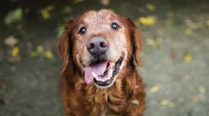 senior dog care information