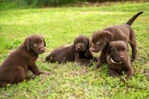 5 Tips For Training Your Puppy Not To Bite