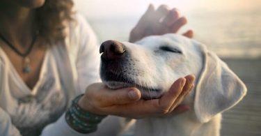 dog care knowledge