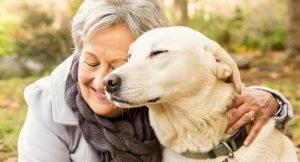 dog trust charity