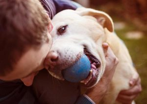 homeowners insurance without dog breed restrictions