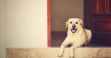 national detector dog training center