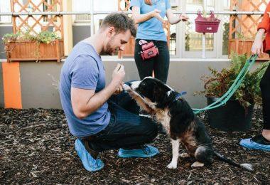 instinct dog behavior