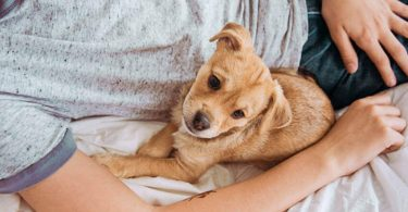 tofu pups vs smart dogs