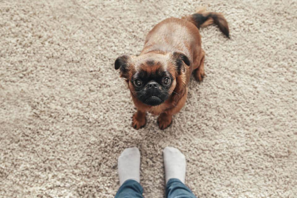 a dog's way home google docs