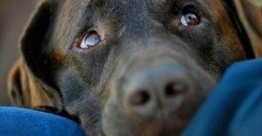 dog health insurance usaa