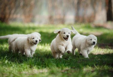 puppy paw blanket