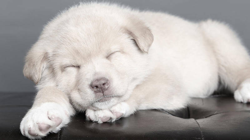 aaa home insurance dog breed restrictions