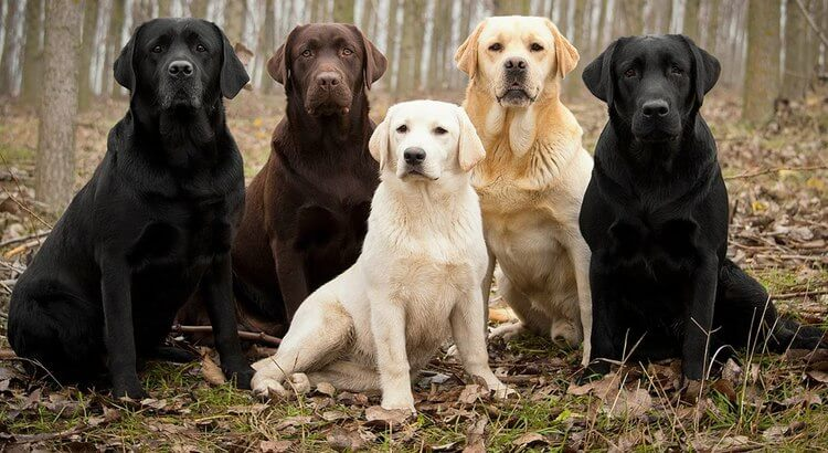 usaa renters insurance dog breeds
