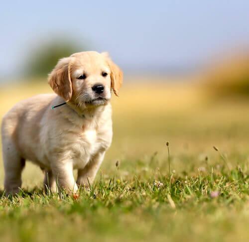 treat a pet dog bed