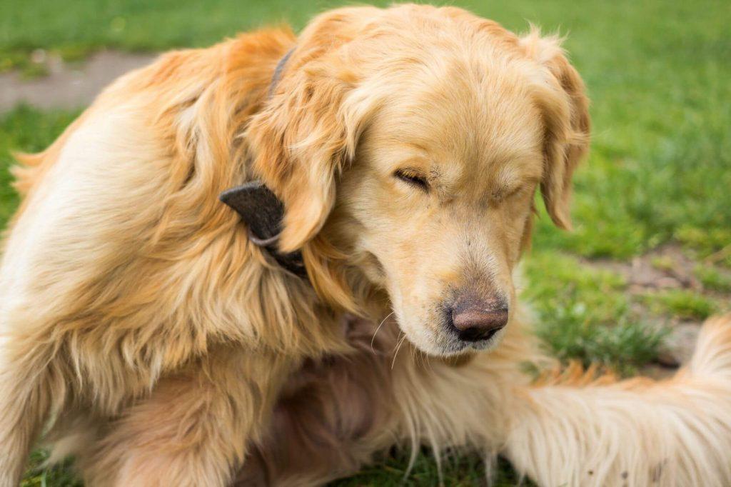 allergy immune supplement for dogs