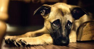 , dog training near me, dog groomers near me, hot dog, dog boarding near me, best dog food, dog collars, dog crate, lazy dog, dog days, national dog day, dog training, akita dog, dog bed, blue buffalo dog food, dog adoption near me, dog tags, royal canin dog food, dog groomer near me, dog kennels, dog shelters near me, dog barking, dog years, dog toys, malinois dog, does the dog die, homemade dog food, fromm dog food, dog insurance, downward dog, smile dog, greyhound dog, dog diarrhea, wolf dog, victor dog food, homemade dog treats, how to draw a dog, dog rescues near me, dog memes, dog food advisor, service dog, wag the dog, dog treats, weiner dog, emotional support dog, cartoon dog, dog boarding, science diet dog food, dog trainers near me, kong dog toys, bird dog, dog haus, dog drawing, sheep dog, african wild dog, dog rescue near me, dog cage, mexican hairless dog, purina dog food, nutro dog food, greater swiss mountain dog, best dog food brands, merrick dog food, dog daycare near me, dog crates, orijen dog food, mobile dog grooming, dog water, rachael ray dog food, dog wash near me, happy dog, dog clippers, diamond dog food, blue dog food, dog tick, dog fence, grain free dog food, dog gate, dog groomers, wireless dog fence, dog groomer, bear dog, large dog crate, dog daycare, dog shelter near me, bull dog, dog walker, mobile dog grooming near me, dog pictures, diamond naturals dog food, wellness dog food, dog in spanish, canidae dog food, dog treat recipes, dog friendly restaurants near me, iams dog food, natural balance dog food, dog kennels near me, hypoallergenic dog, acana dog food, cbd dog treats, dog videos, beagle dog, dog bone, how often should i take my dog to the vet, dog allergies, ugly dog, cat dog, dog sitting, franklin county dog shelter, hot dog recipes, dog bowls, dog teeth, mop dog, dog poop, purina one dog food, lab dog, taste of the wild dog food, nutrisource dog food, dog bite, dog walking, how to trim dog nails, electric dog fence, chicago 